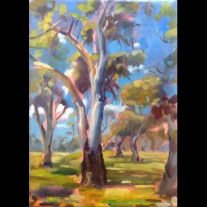 Tamworth River Gums
